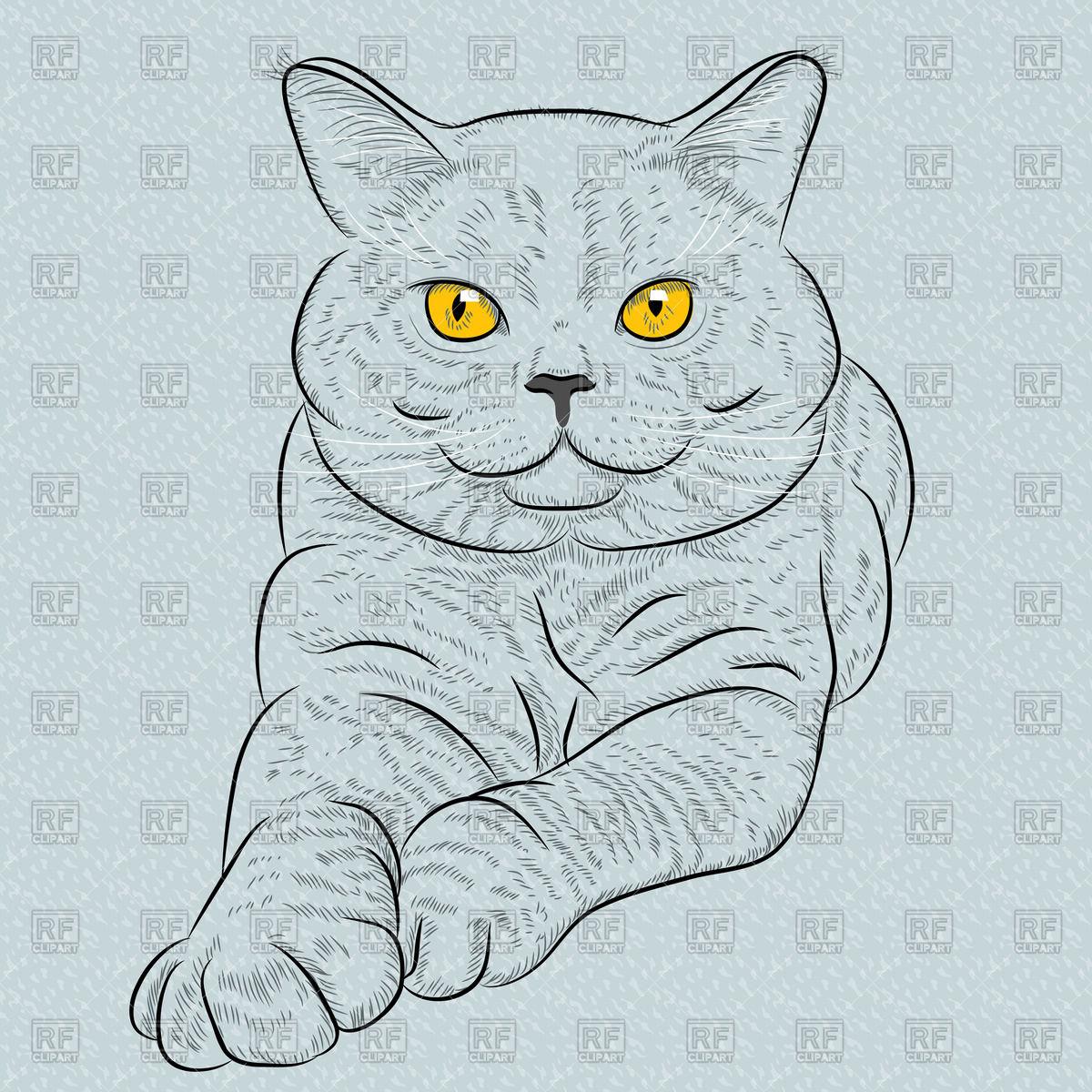 Рисунок кошки британки