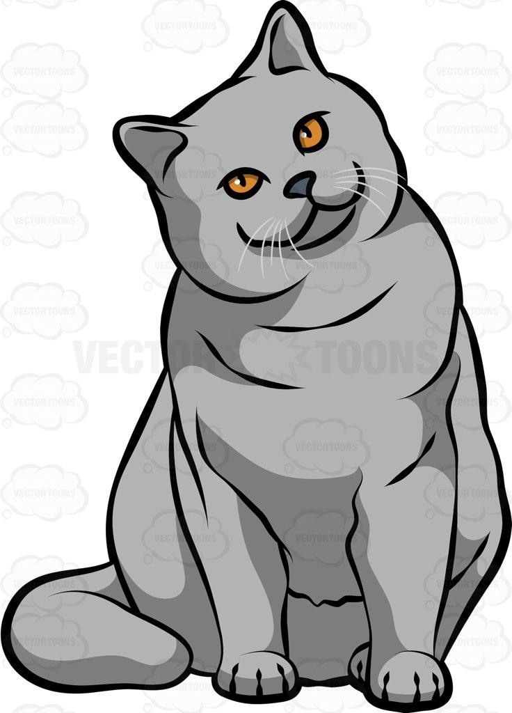 A British Shorthair Cat Cartoon Clipart.