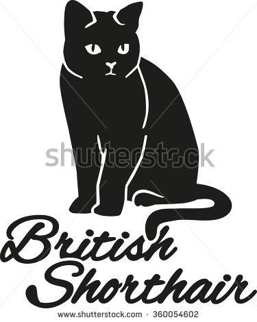 British Shorthair Stock Vectors, Images & Vector Art.