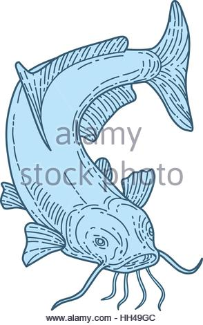 Barbel Stock Photos & Barbel Stock Images.