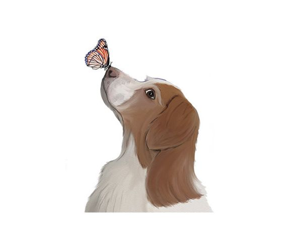 Brittany Spaniel with Butterfly Watercolor Clip Art.