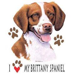 Springer Brittany Spaniel Dog folk Art PRINT of Todd Young.