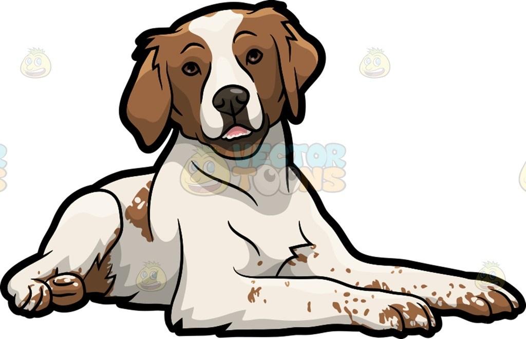 A cute Brittany Spaniel pet dog » Clipart Portal.
