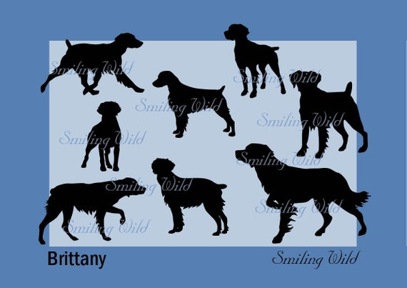 Brittany dog svg silhouette Brittany spaniel clipart printable cut file  cuttable artwork art digital design png.
