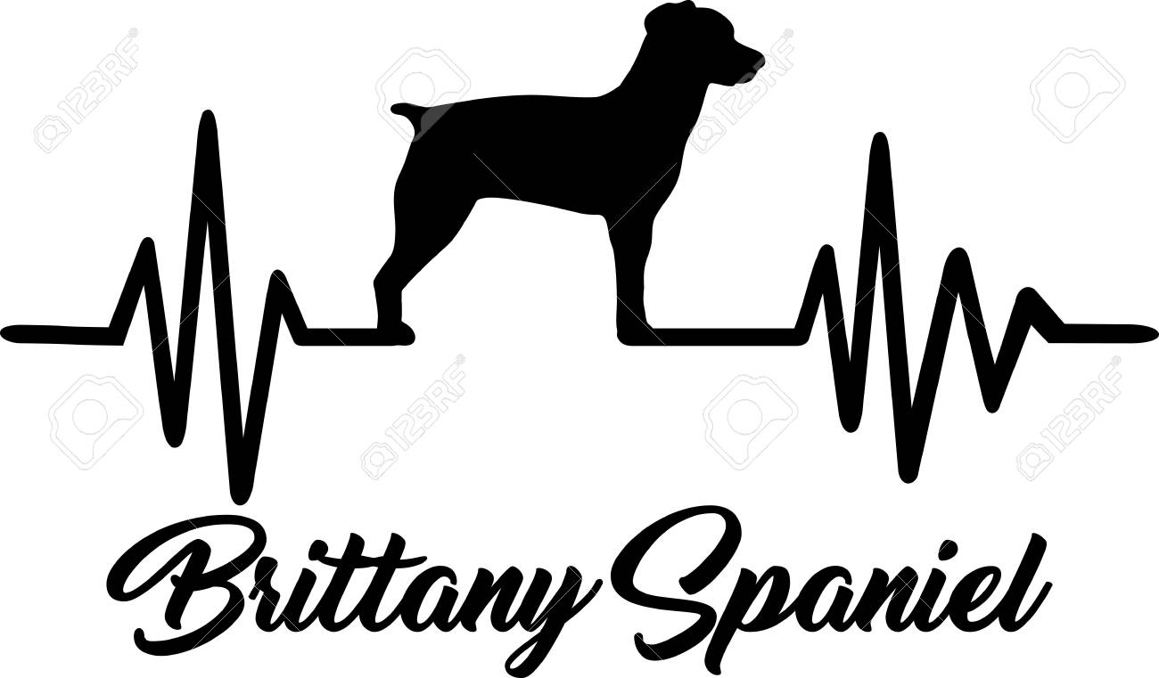 Heartbeat pulse line with Brittany Spaniel dog silhouette.