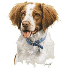 145 Best BRITTANY SPANIEL clipart images in 2019.