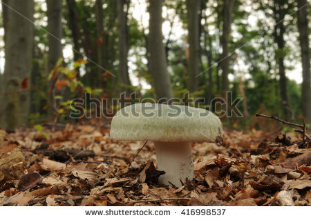 "russula Mushroom"" Stock Photos, Royalty."
