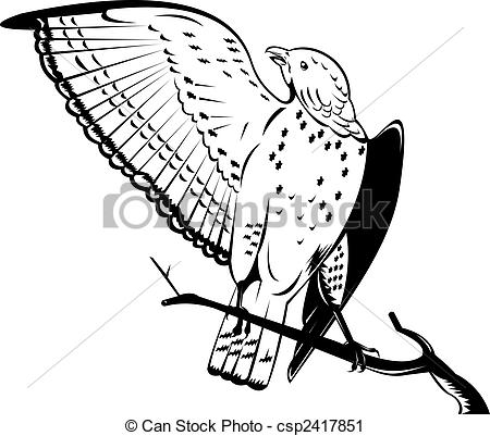 Clipart of Broad winged hawk.