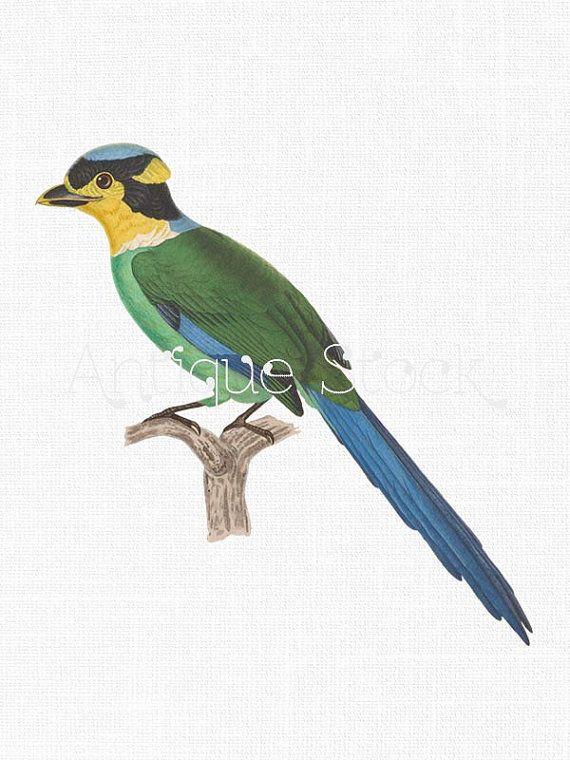 Tropical Bird Clip Art.