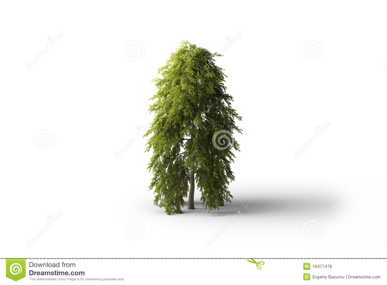 Isolated Green Broadleaf Tree Stock Illustrations.