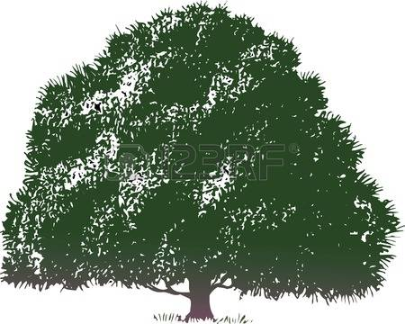Broadleaf tree clipart.