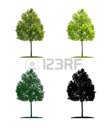 183 Broadleaf Stock Vector Illustration And Royalty Free Broadleaf.