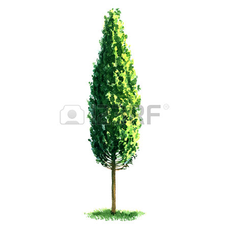 113 Broadleaf Tree Stock Vector Illustration And Royalty Free.