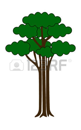 Broad Leaf Trees Images & Stock Pictures. Royalty Free Broad Leaf.