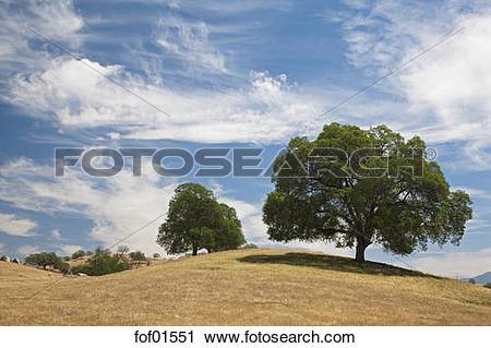 Stock Photography of USA, California, Broad.