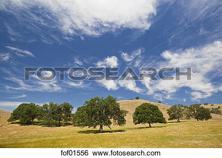 Stock Images of USA, California, Broad.