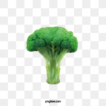 Broccoli Clipart Png, Vector, PSD, and Clipart With Transparent.