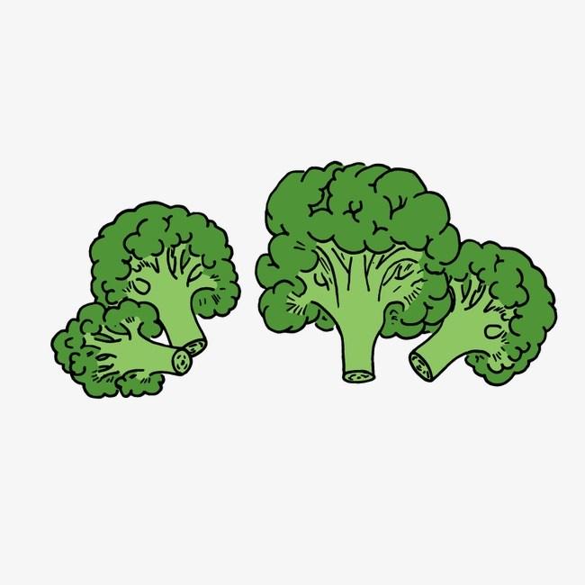 Broccoli clipart png 2 » Clipart Portal.