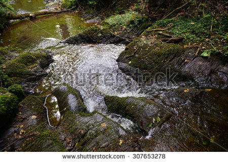 Moss Growing On Fallen Tree Forest Stock Photo 111819521.