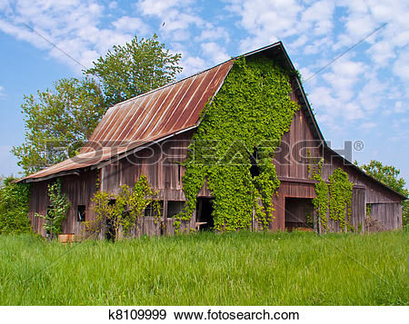 Stock Photograph of Old Barn With Ivy and Blue Sky Background.