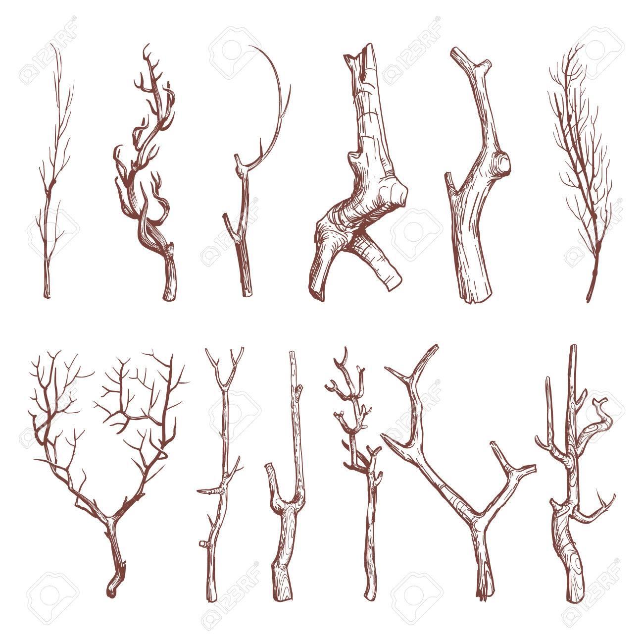 Sketch wood twigs, broken tree branches vector set. Botany wood...