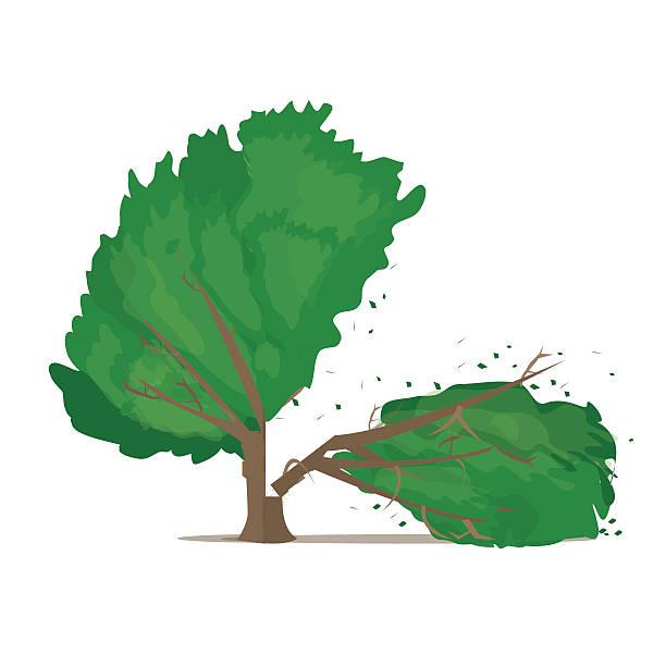 Best Broken Tree Illustrations, Royalty.