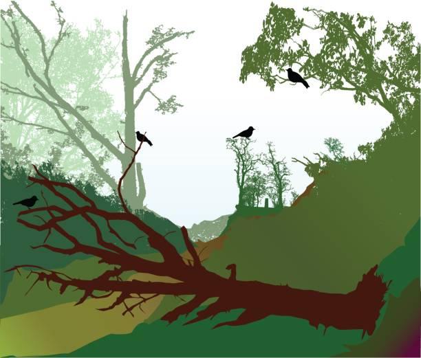 Fallen Tree Limb Illustrations, Royalty.