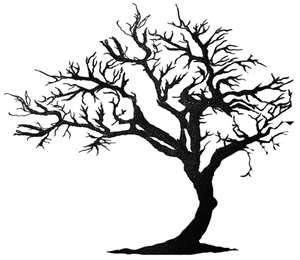 tree kind of bent sideways.
