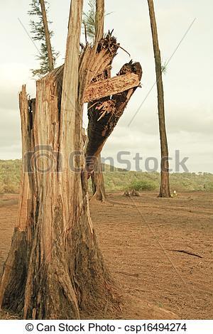 Picture of Broken tree trunk csp16494274.
