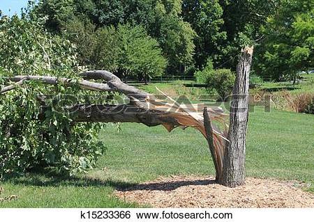 Stock Images of Broken tree trunk in city park k15233366.