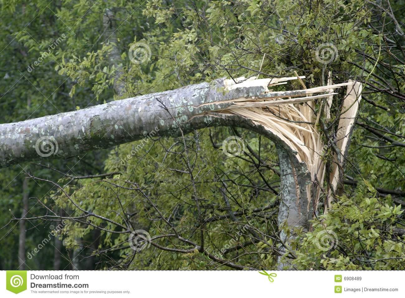 Split tree trunk clipart.