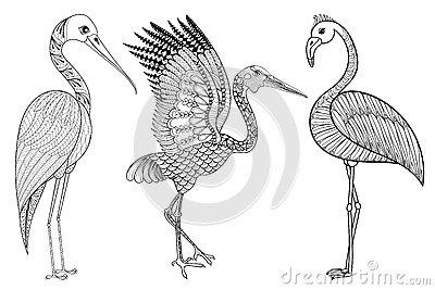 Adult Coloring Bird Crane Stock Illustrations.