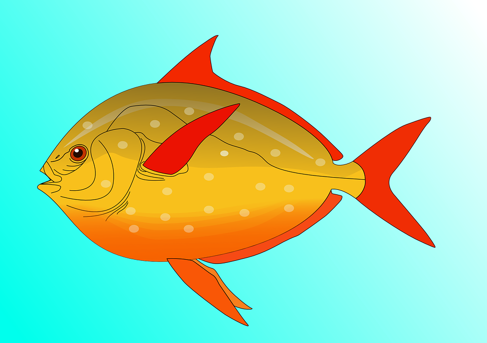 Free vector graphic: Fish, Water, Swim, Colorful.