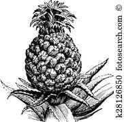 Bromeliaceae Clipart EPS Images. 6 bromeliaceae clip art vector.