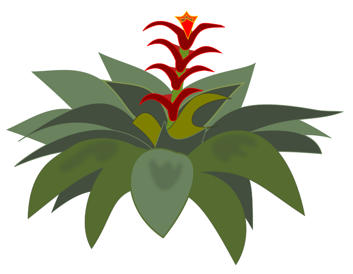 Free to Use & Public Domain Bromeliad Clip Art.