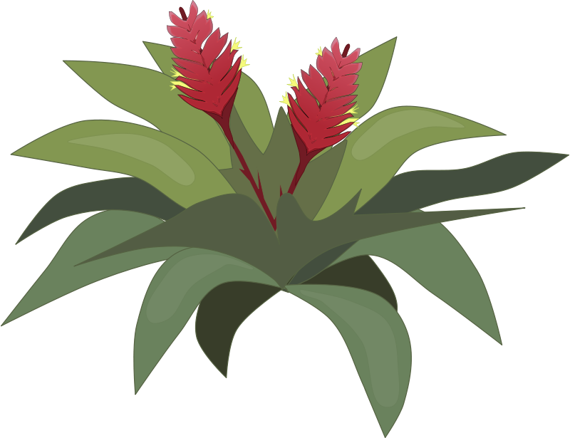 Tropical Plants Clipart 20 Free Cliparts Download Images On Clipground 2019