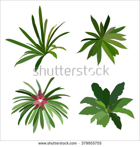 Bromeliads Stock Photos, Royalty.