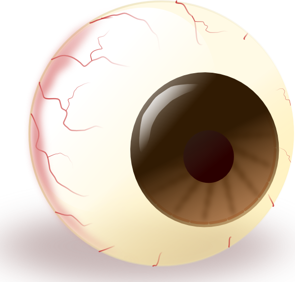 Ecuabron Brown Eye clip art Free Vector / 4Vector.