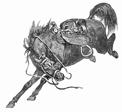 Free Bucking Bronc Clipart, 1 page of Public Domain Clip Art.