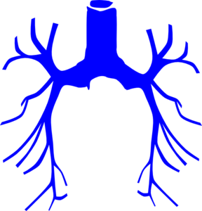 Bronchial Tree Clip Art at Clker.com.