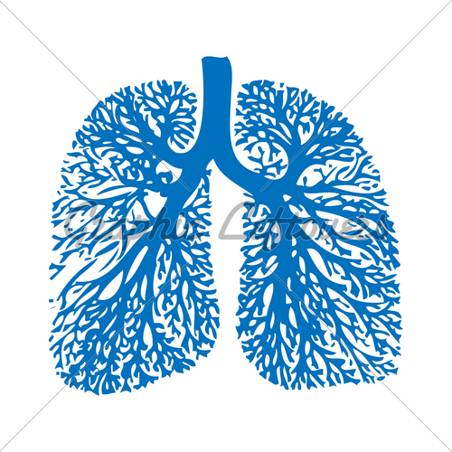 Lung Anatomy · GL Stock Images.