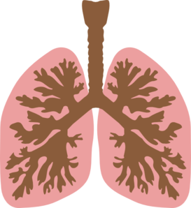 Lungs And Bronchus Clip Art at Clker.com.