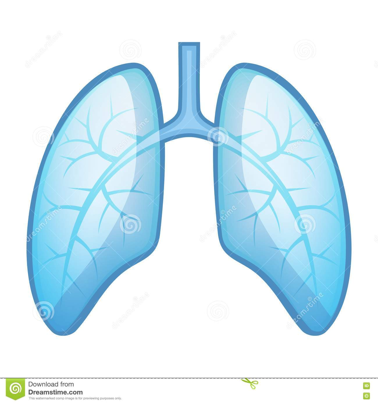 Lungs, Trachea And Bronchi Stock Vector.