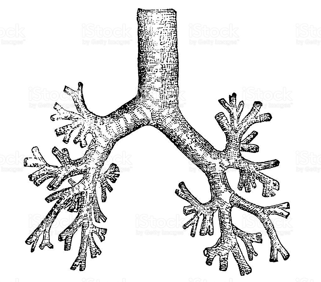 Bronchial Tube stock vector art 461117299.