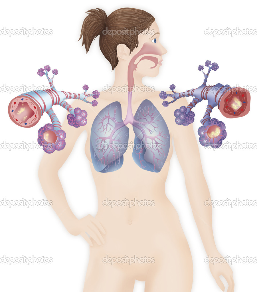 Depiction of a healthy bronchial tube — Stock Photo © imagepointfr.