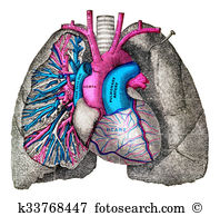 Bronchial tubes Illustrations and Clipart. 25 bronchial tubes.
