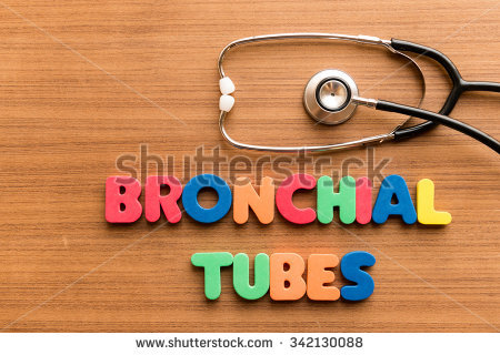 Bronchial Tube Stock Photos, Royalty.