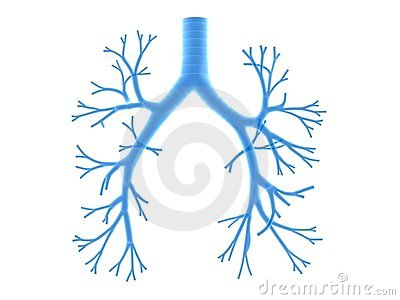 Human Lungs And Bronchi And Oxygen In X.