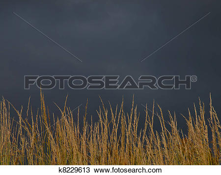 Stock Photo of brooding sky over brown grass k8229613.