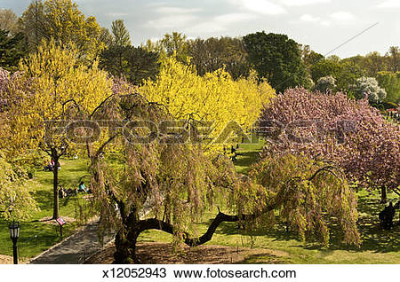 Stock Photo of Spring in Brooklyn Botanical Garden, Brooklyn, NY.